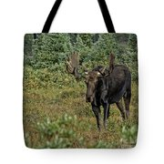 Moose In Shrubs Tote Bag