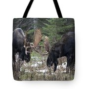 Moose. Males Fighting During The Rut Tote Bag