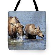 Moose Mama With Her Calf Tote Bag