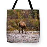 Moose Pawses In Mid-drink Tote Bag