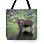 Moose Yellowstone Np_grk6918_05222018 Tote Bag