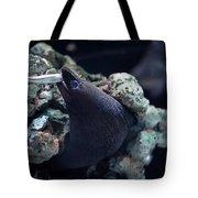 Moray Eel Eating Little Fish Tote Bag