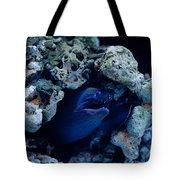 Moray Eel Or Muraenidae Fish Tote Bag