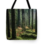More Tree Trunks And Ferns Tote Bag