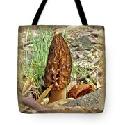 Morel Mushroom - Green Lane Pa Tote Bag