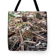 Morels A Plenty  Tote Bag