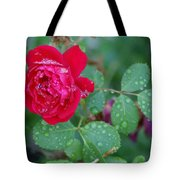 Morning Dew On A Rose Tote Bag