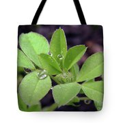 Dewdrops On Leaves Tote Bag