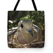 Morning Dove On Her Nest Tote Bag