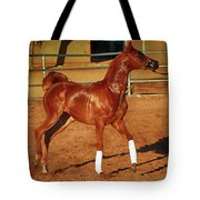Morning Exercise Tote Bag