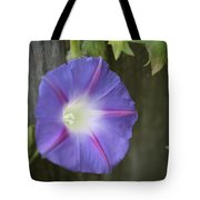 Morning Glory On Fence Tote Bag