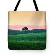 Morning Light And Oak Tree Tote Bag