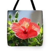 Morning Light Hibiscus Tote Bag