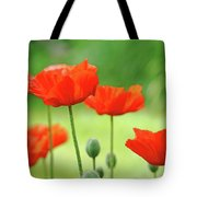 Morning Light Poppies Tote Bag