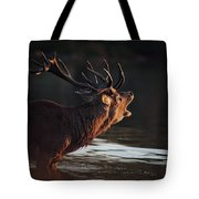 Morning Stag Tote Bag