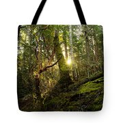 Morning Stroll In The Forest Tote Bag
