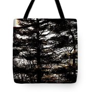 Morning Sunlight Through The Pines Tote Bag
