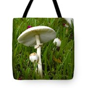 Morning Surprise Tote Bag