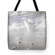 Morning Swan Trio  7845  Tote Bag