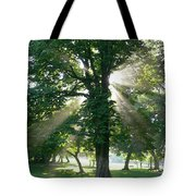 Morning Tree Tote Bag