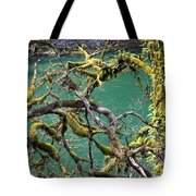 Moss And Trees Tote Bag