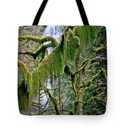 Moss At Munson Creek Tote Bag