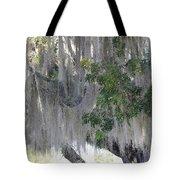 Moss Draped Tree Tote Bag