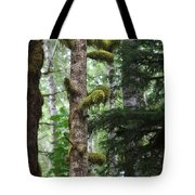 Moss-draped Trees On Tiger Mountain Wt Usa Tote Bag