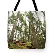 Moss Under The Cedars Tote Bag