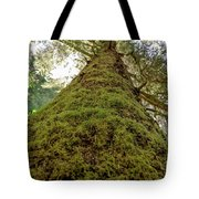 Moss Up A Tree  Tote Bag