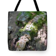 Mossy Tree Tote Bag