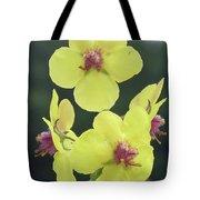 Moth Mullein Wildflowers - Verbascum Blattaria Tote Bag