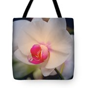 Moth Orchid 1 Tote Bag by Kate Word
