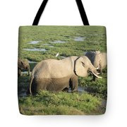 Mother And Calves Tote Bag