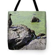 Mother And Her Ducklings Tote Bag