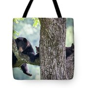 Mother Bear And Cubs Tote Bag