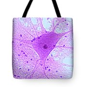 Motor Neuron From Spinal Cord Tote Bag