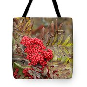 Mountain Ash With Berries Tote Bag