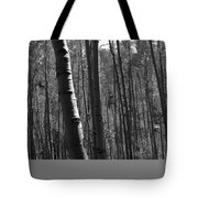 Mountain Aspens Tote Bag