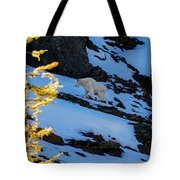Mountain Goat And Larches Tote Bag