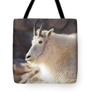 Mountain Goat Billy Basks In The Morning Sun Tote Bag