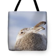 Mountain Hare - Scottish Highlands  #10 Tote Bag