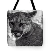 Mountain Lion Bw Tote Bag