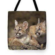 Mountain Lion Cubs On Rock Outcrop Tote Bag