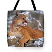 Mountain Lion On Snow-covered Rock Outcrop Tote Bag
