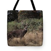 Mountain Nyala Tote Bag