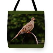 Good Morning Mourning Dove  Tote Bag