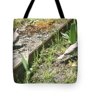 Mourning Doves Tote Bag