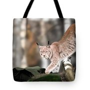 Moving Through The Forest Tote Bag