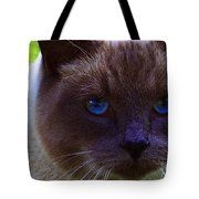 Mr. Blue Eyes Tote Bag